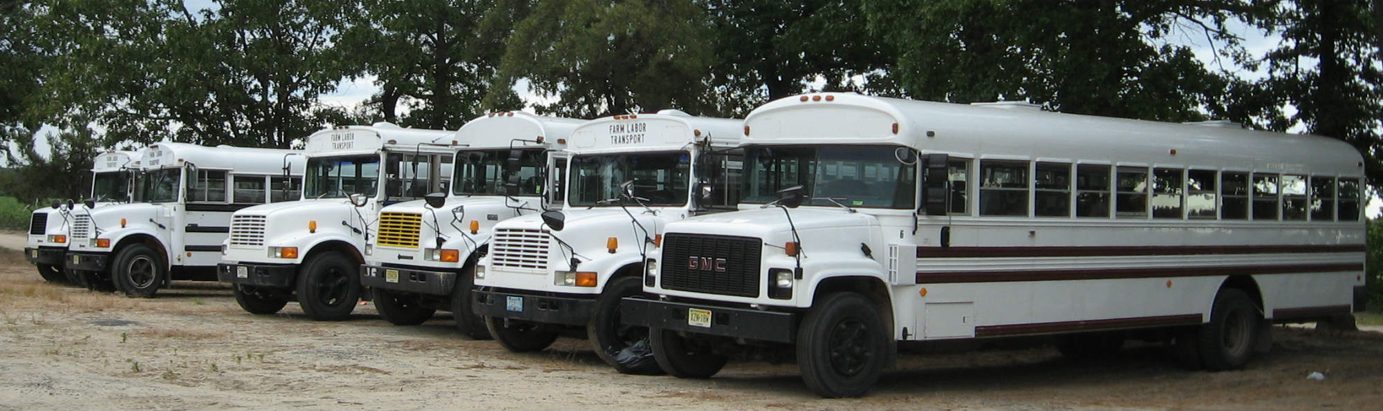 six white farm labor buses